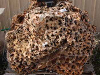 Sponge Boulder